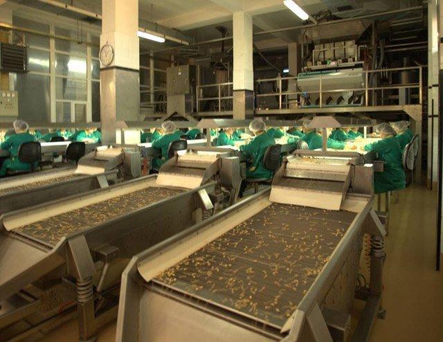 Hazelnut Roasting Organic Nuts Supplier BATA FOOD