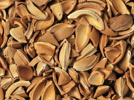 Apricot Kernels Shell Supplier Producer BATA FOOD Turkey