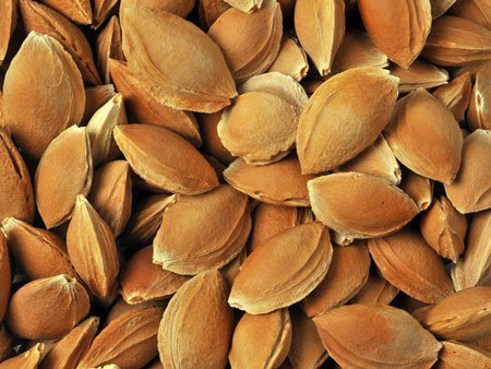 Sweet Apricot Kernels Inshell Supplier Producer BATA FOOD Turkey