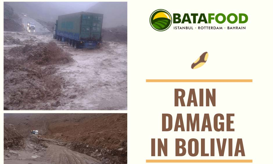 Rain Damage In Bolivia - Brazil Nut Processing Regions