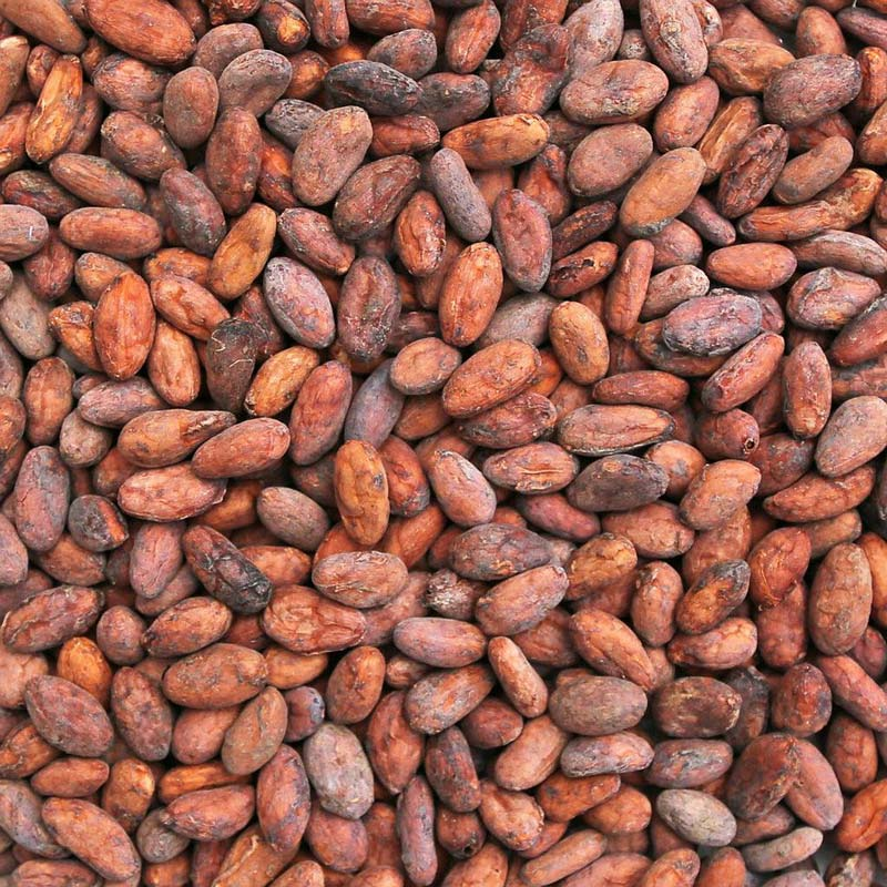 Organic Cacao Cocoa Beans Powder Butter Nibs Supplier BATA FOOD Netherlands Turkey Bahrain