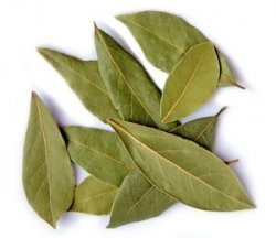 Organic & Conventional Laurel Bay Leaves Whole Powder Supplier BATA FOOD