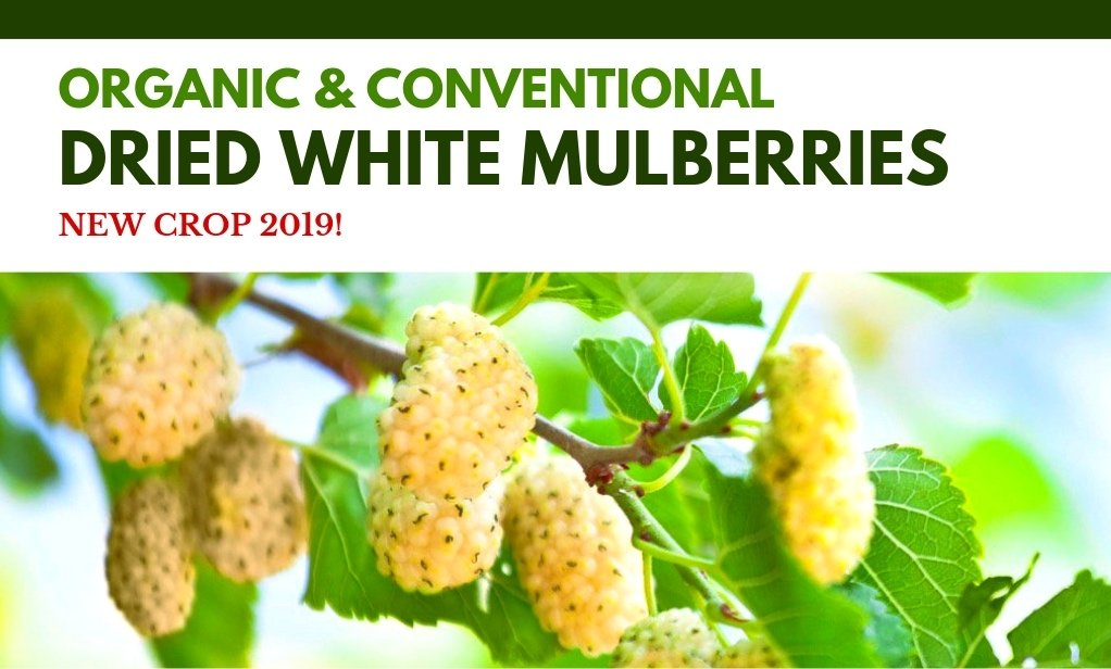 Dried White Mulberries New Crop 2019