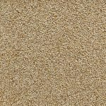 Bulk Wholesale Organic Quinoa Supplier BATA FOOD BV Netherlands