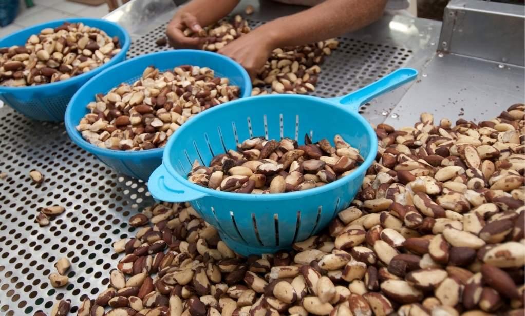 Brezilya Cevizi ithalatçısı toptan organik ve konvansiyonel gıda ürünleri satış Bata Food Türkiye Hollanda